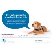 Předvýchova asistenčního psa