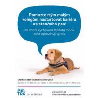 Výchova asistenčního psa